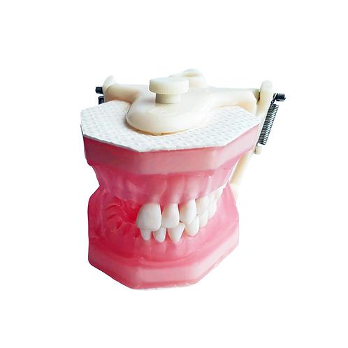 Manequim para Endodontia Pronew com dentes cravados