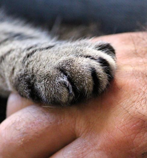 cats-paw-1375792_v2.jpg