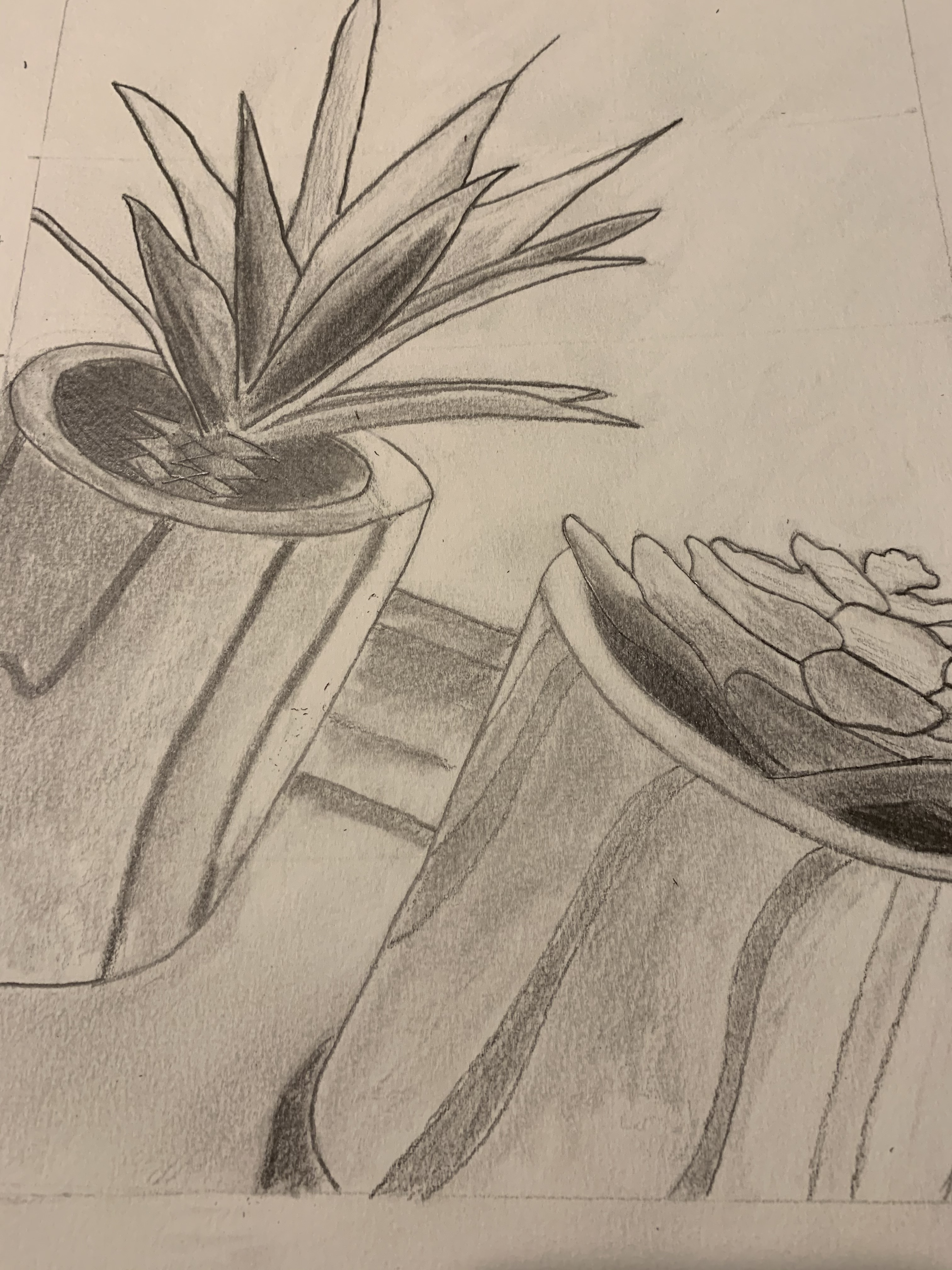 jamison plants