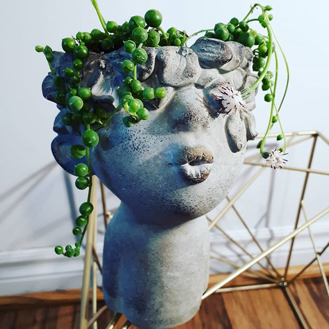 String of pearls in kissing face pots