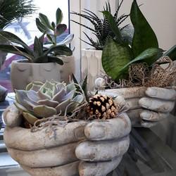 Beautiful succulents in gorgeous ceramic