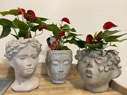 Anthurium in cool ceramics