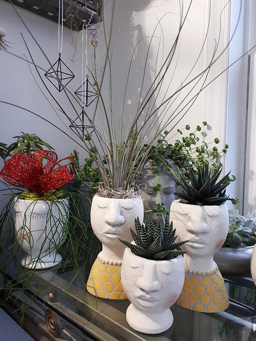 Face pot with succulents