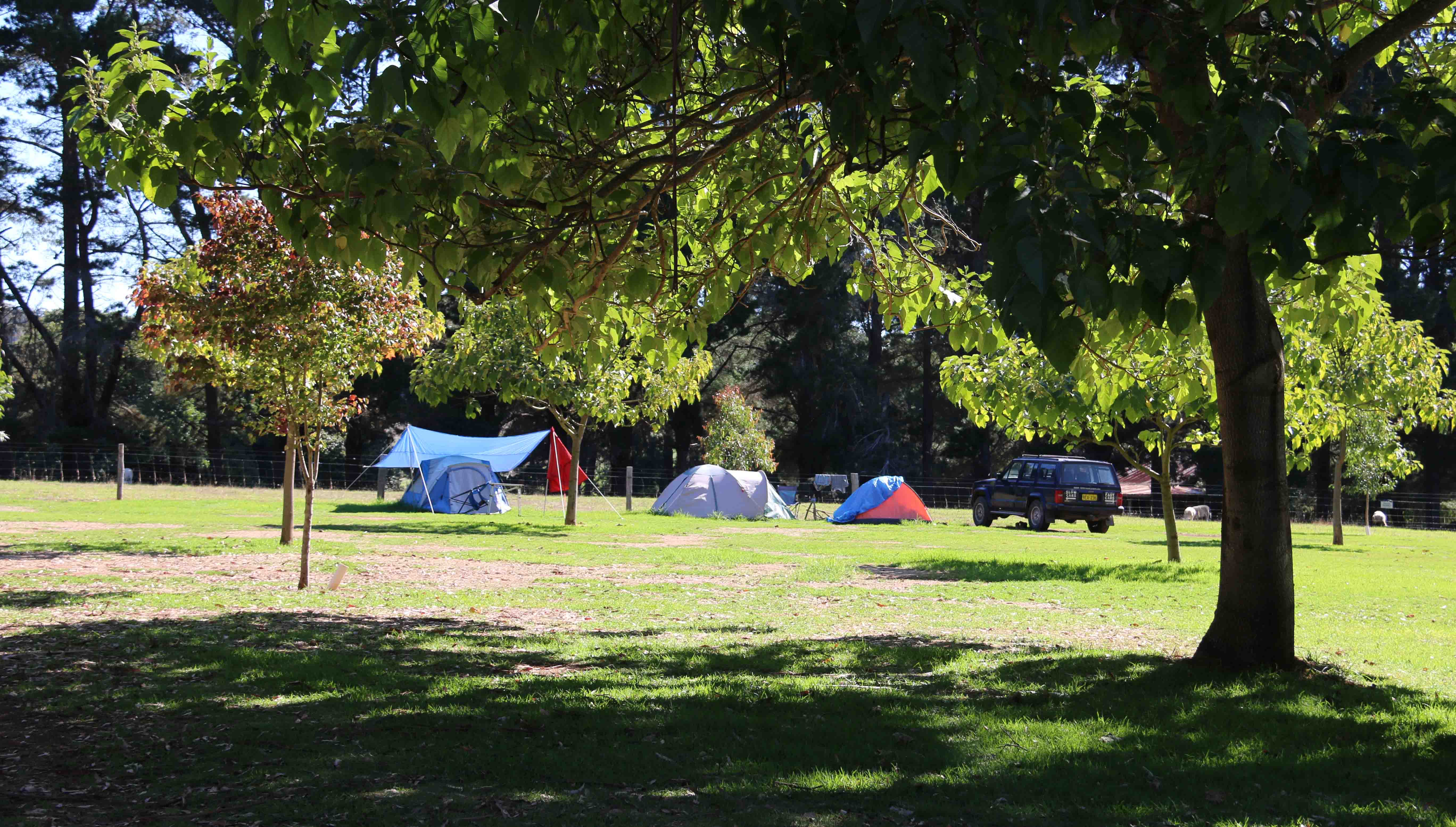 Camping_9736