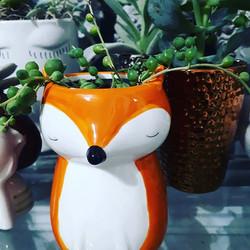Sitting fox at La Nostalgie