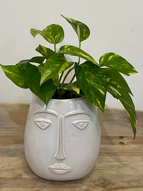 Face vase with photos