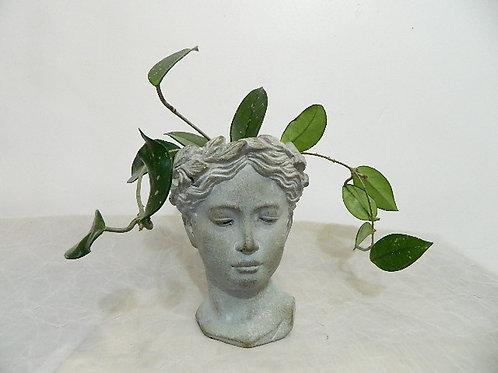 Greek Goddess with Hoya