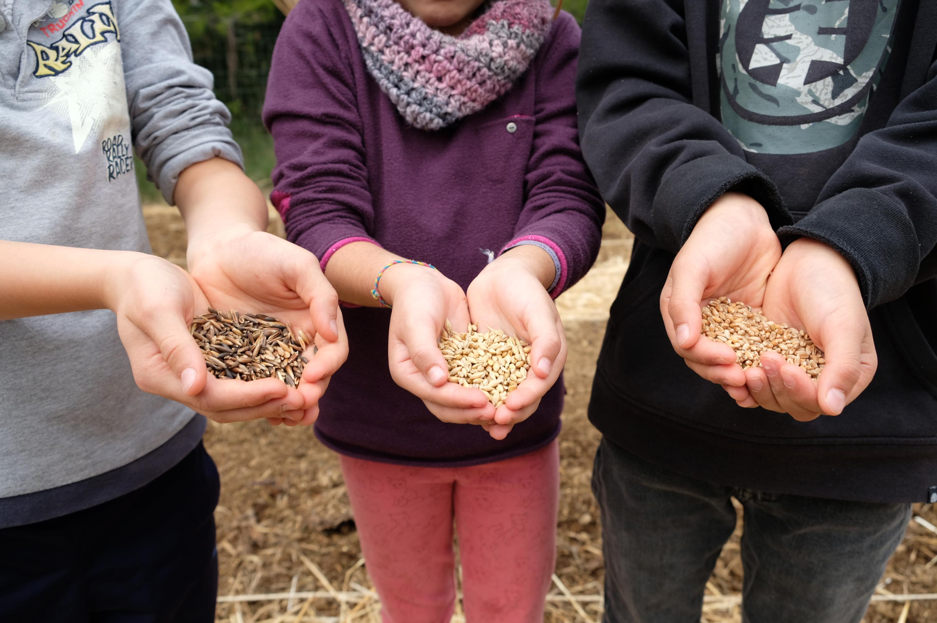 Aprendemos sobre el cultivo de cereales