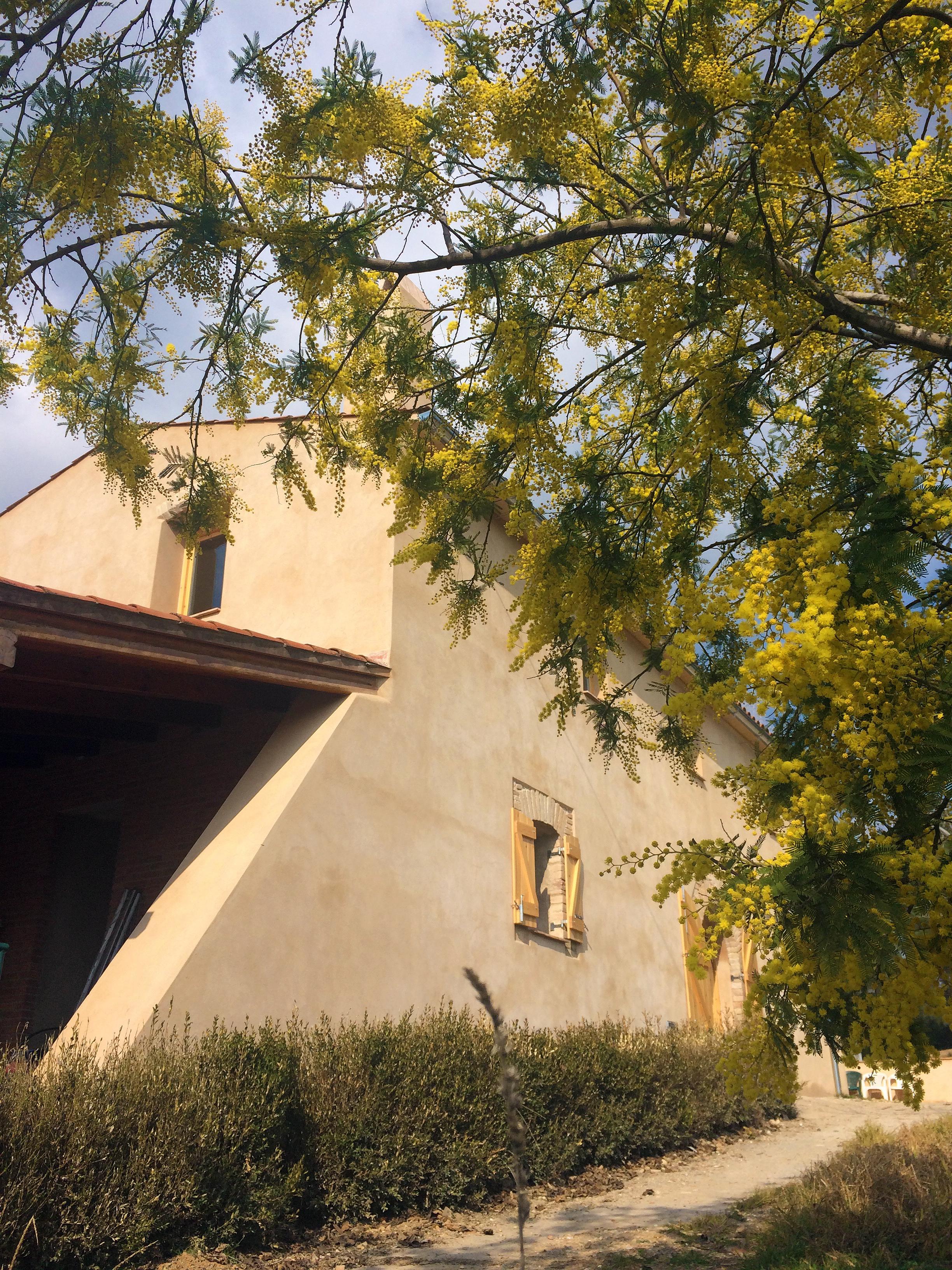 Mimosa y fachada