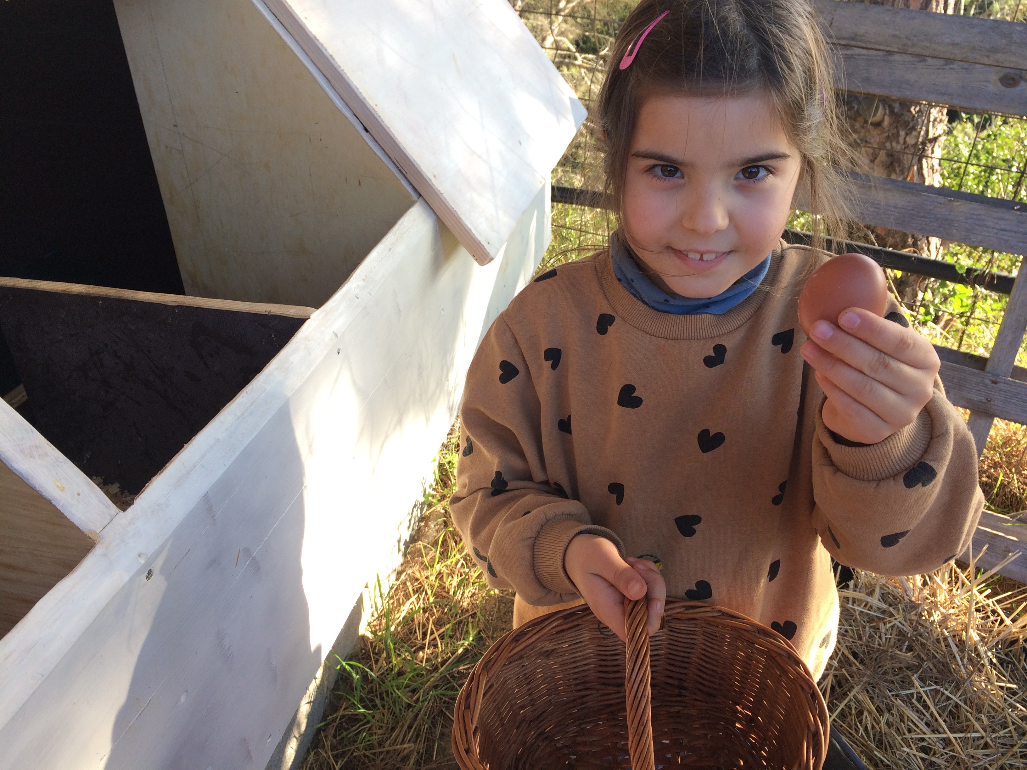 Recogemos huevos ecológicos