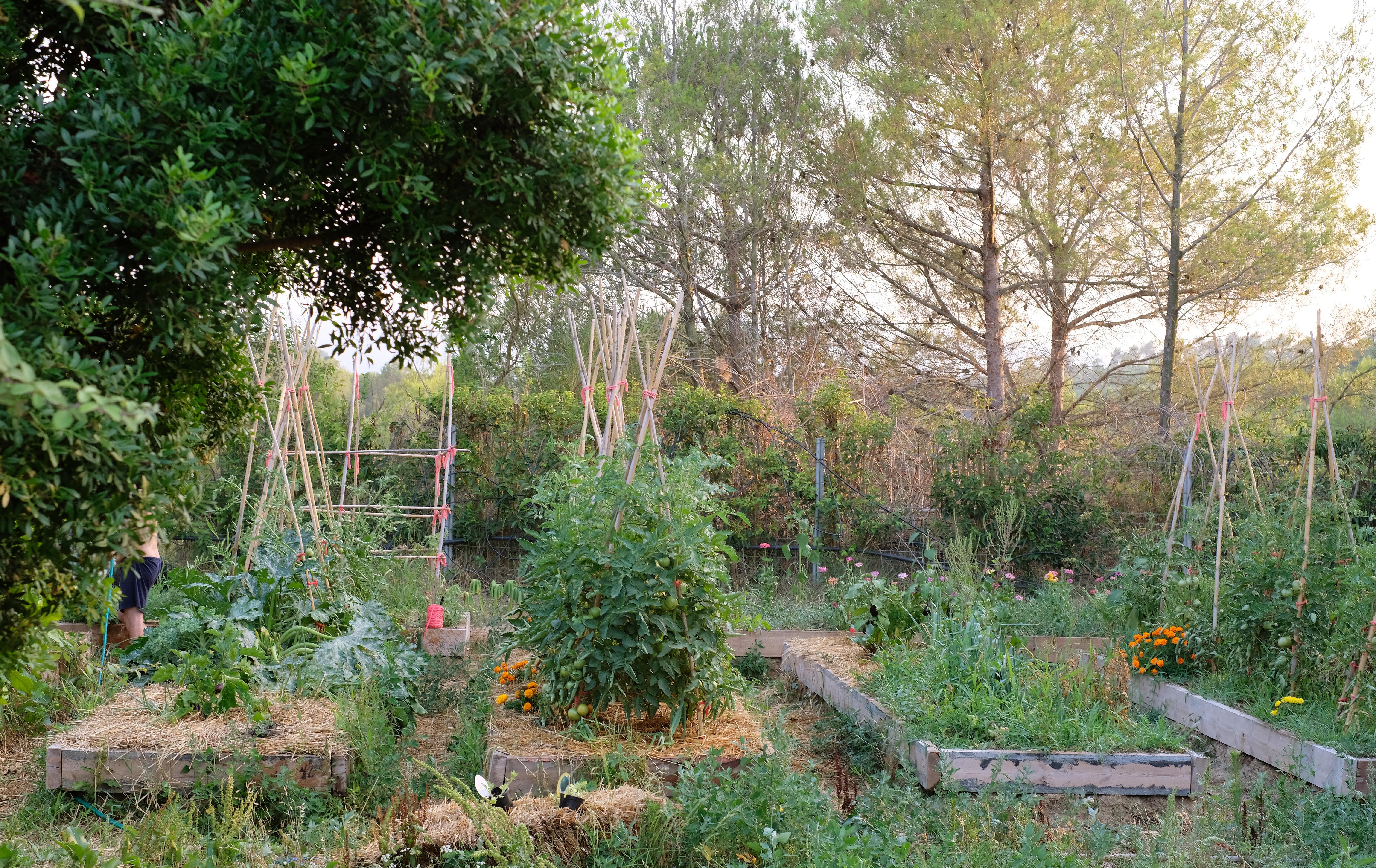 Huerto en bancales de permacultura