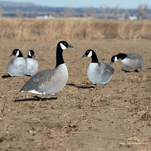 V2AF (Alternate) Flocked Canadas