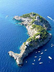 wayne-island.jpg