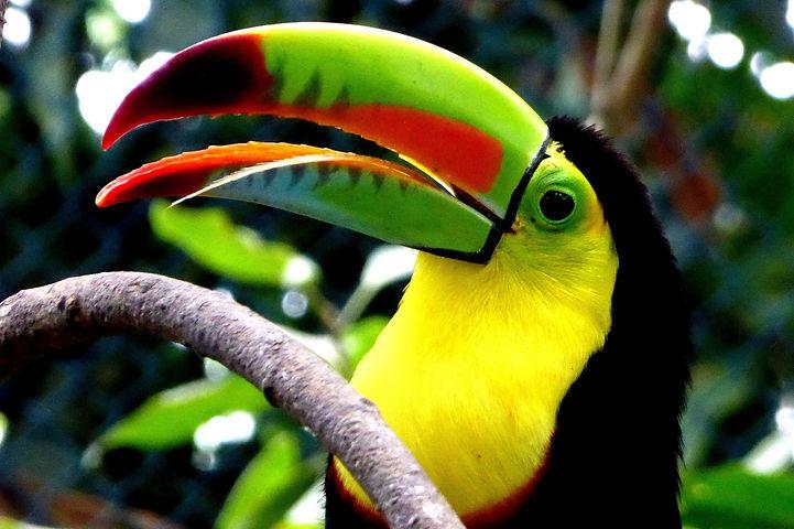toucan-4240727_1920.jpg