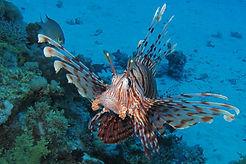 Mer_Rouge_Voyages_Intérieurs_3.JPG
