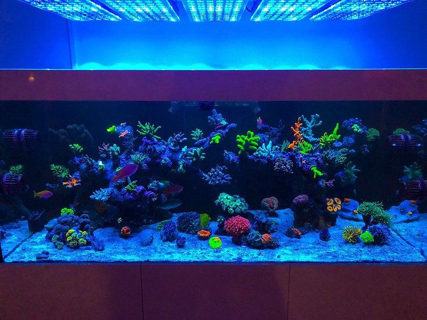 LED-Aquarium-lighting-Orphek-Atlantik68.