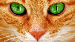 Femme Actuelle : 7 qualités du chat dont on peut s'inspirer pour le travail