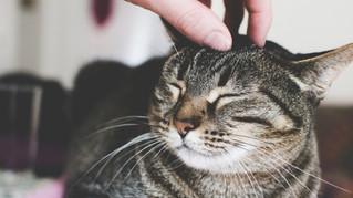 Radio Canada : Le 15-18 : Vivre comme un chat pour vivre heureux !