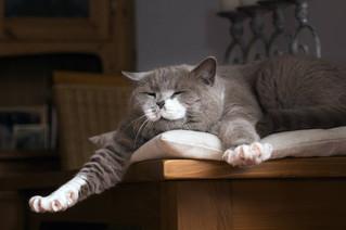 Pratique.fr : Développement personnel, et si on s'inspirait de la sérénité du chat