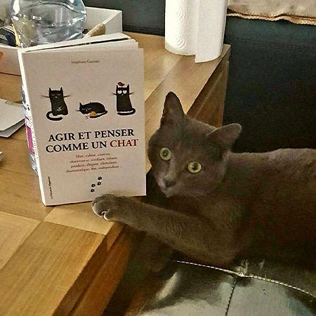 Agir et penser comme un chat-Stéphane Garnier.jpg
