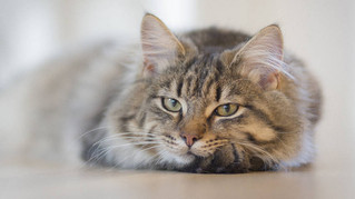 Lalibre.be : 7 conseils précieux inspirés du chat pour apprendre à mieux vivre