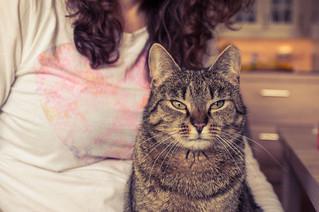 LeVif Weekend: Psycho: Ces chats qu'on devrait imiter !