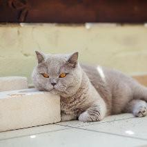 Et si vous deveniez un chat ? Centre européen de formation