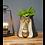 Thumbnail: Monkey Head Plant Pot