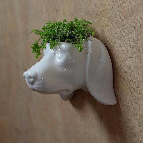 Decorative Ceramic Indoor Wall Planter -Dog