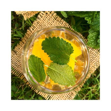 3 Seasonal Herbal Teas and Recipes