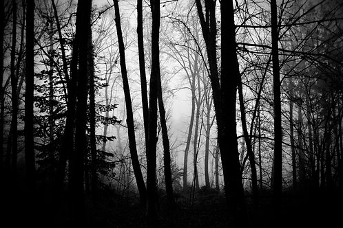 The Forest of Dreams