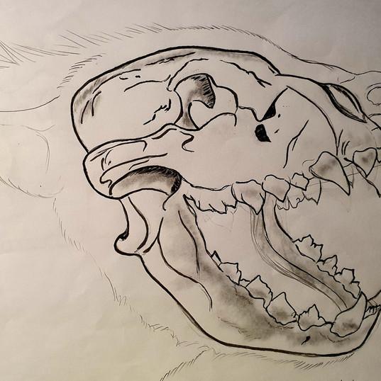 Squelette de hyène