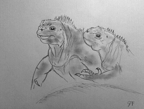 Le couple d'iguanes des Galapagos