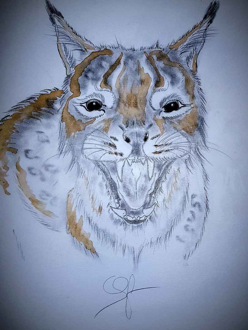 La menace du lynx