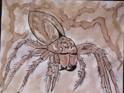 L'araignée Dame blanche