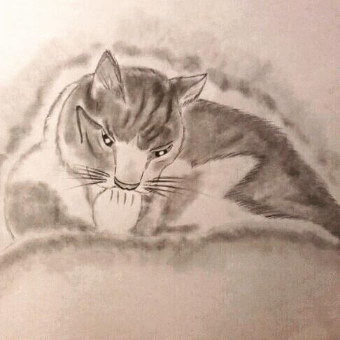 Le chat de campagne