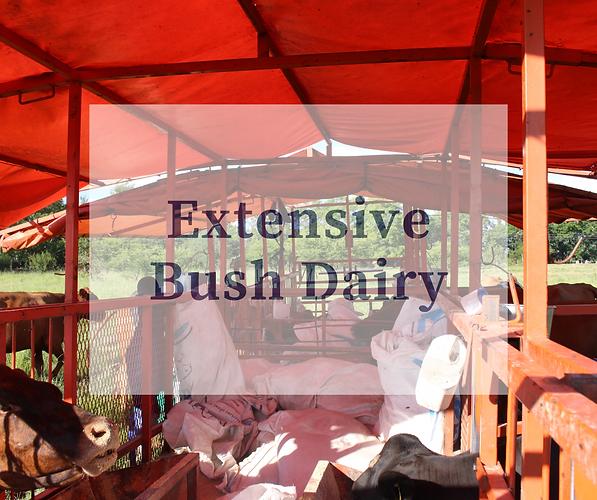 Extensive Bush Dairy