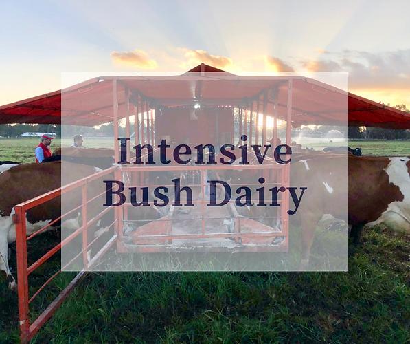 Intensive Bush Dairy