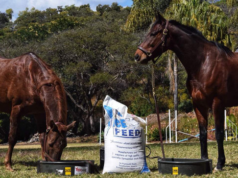 Top Tips for Feeding your Horses