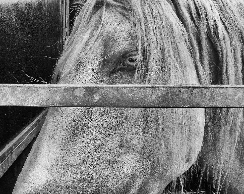 Albino horse.jpg