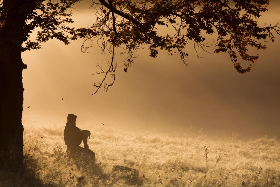 Meditation im Wald, Natur, Nebel.jpeg