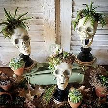 halloween plant.jpg