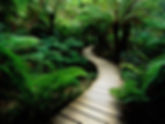 path in tropical forest.jpg