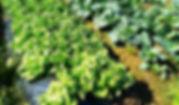 農園01.jpg
