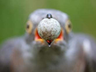 Ornitologia e Segurança da Informação