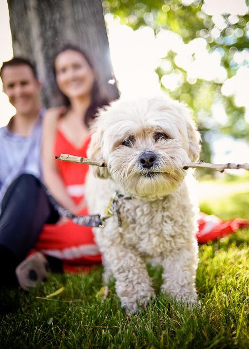 Dog at engagment session