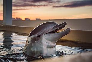 Clearwater Marine Aquarium.jpg
