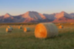 miles-ertman-hay-bales-in-a-field-with-t