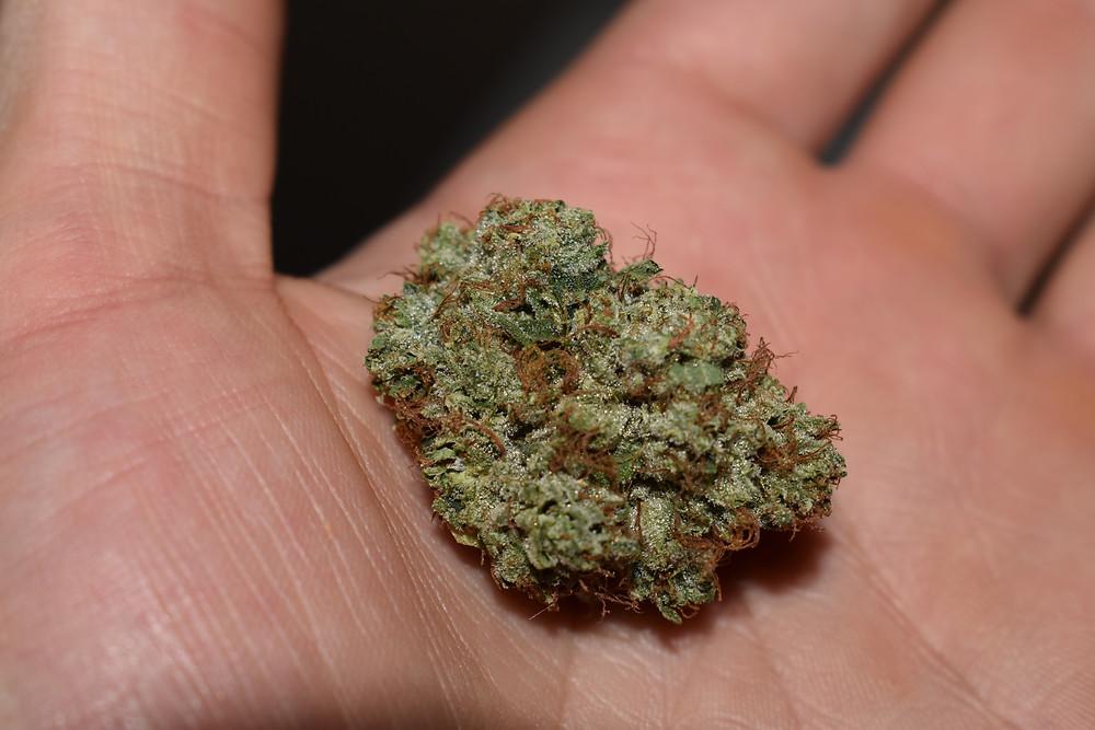 cbd, cannabis, hemp, marijuana, mmj, medical marijuana card, medical marijuana, medicine