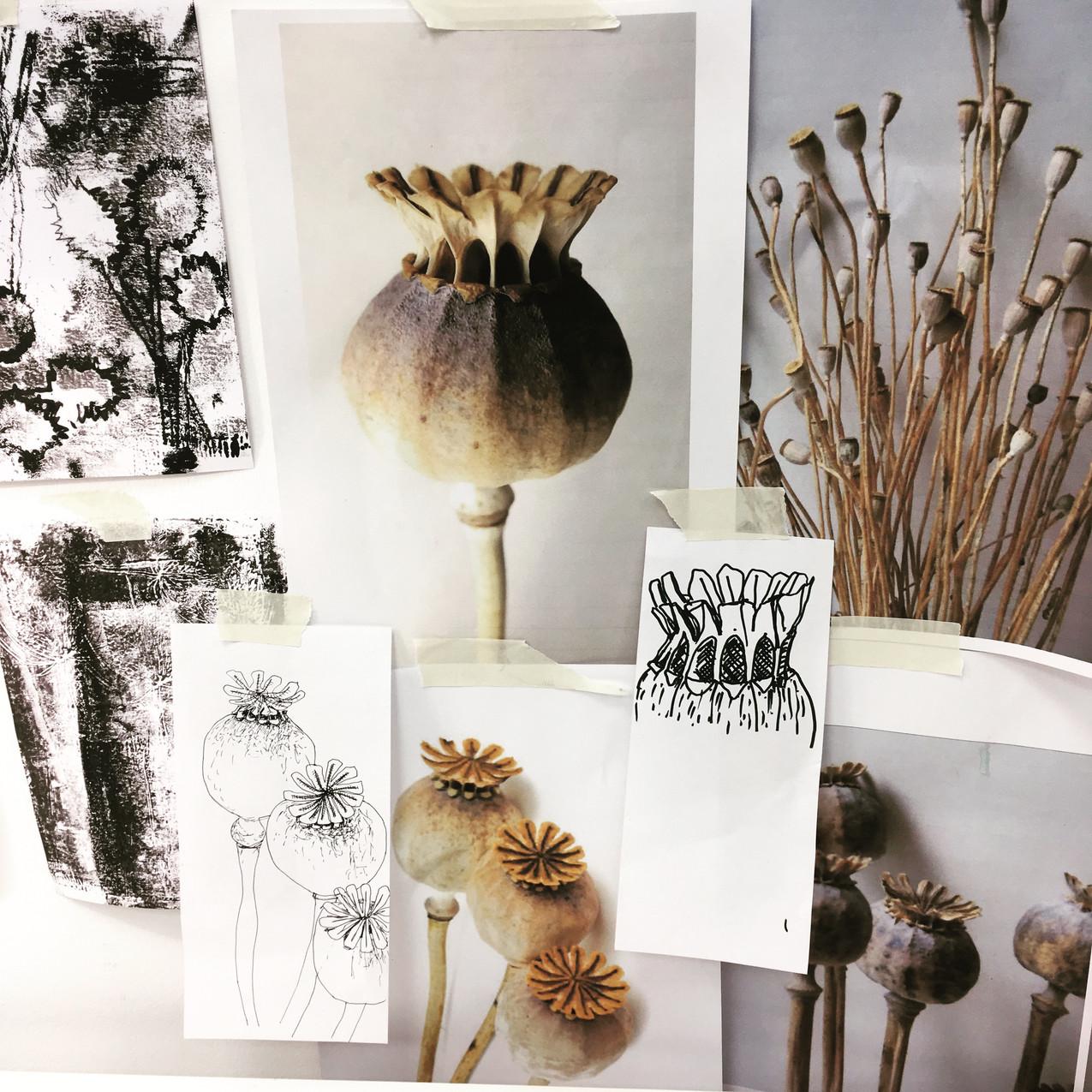 Poppy seed head studies